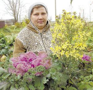 Александру Андрееву из д. Тиманова Гора можно назвать отличной хозяйкой, огородницей и цветоводом. В этом году ее порадовали своим цветением не только пионы, розы, но и декоративная капуста.
