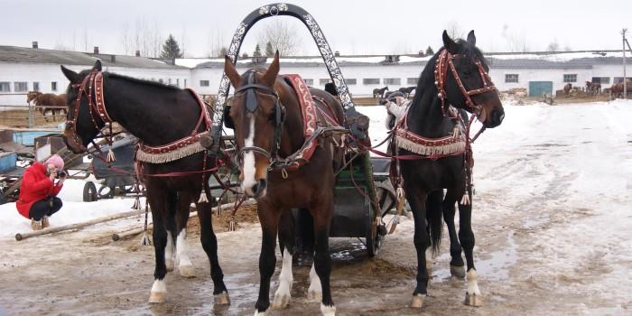 С 2002 года по инициативе заслуженного работника культуры А. К. Ехалова в феврале на территории конного завода проводится традиционный зимний праздник, полюбившийся вологжанам, - праздник Коня.
