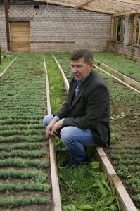 Алексей Власов производит наблюдение за сеянцами в теплице лесхоза.