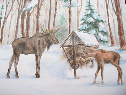 Победитель районного конкурса «Зеленая планета-2018» - работа «Забота о животных», автор - десятиклассница Рослятинской школы Светлана Стеблева.