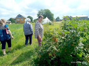 Любовь Голубцова (в центре) рассказала и показала конкурсной комиссии, какие овощи и кустарники растут на её участке.