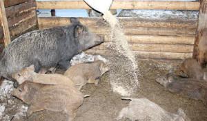 Диких животных следует ограждать от людей.