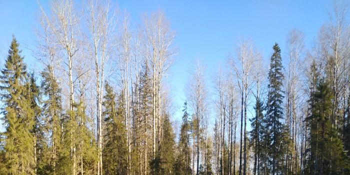 в ходе проверки лесозаготовительной техники в лесах Бабушкинского района выявлены нарушения при ее эксплуатации.