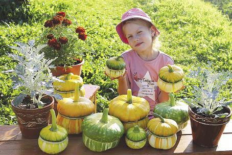 Чудесные декоративные тыквы. Фото предоставлено Екатериной Хариной.
